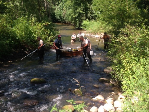 Michigan DNR crew, along with GVSU students and BCD staff, capture and mark fish along the creek to monitor improvements in fish passage before and after the project.